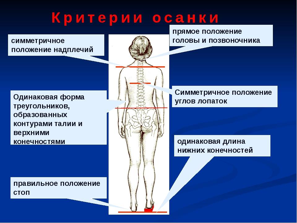 прямое положение головы и позвоночника симметричное положение надплечий Симме...