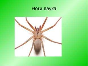 Ноги паука