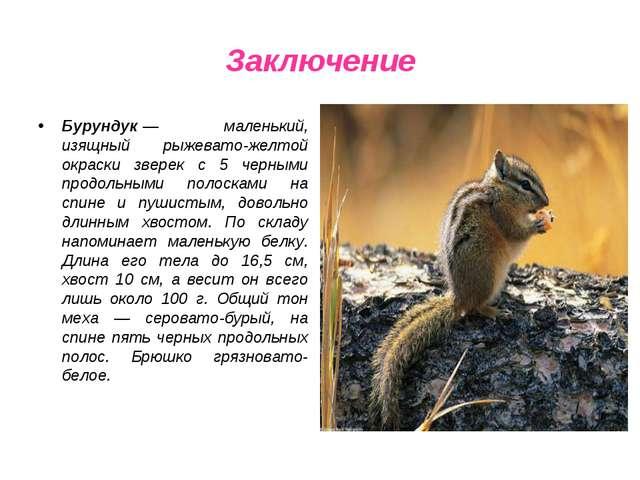 Заключение Бурундук— маленький, изящный рыжевато-желтой окраски зверек с 5 ч...