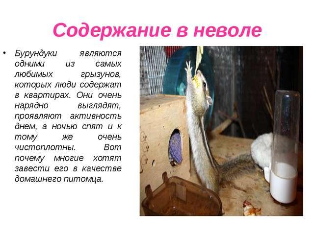 Содержание в неволе Бурундуки являются одними из самых любимых грызунов, кото...