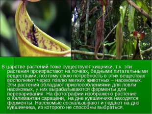 В царстве растений тоже существуют хищники, т.к. эти растения произрастают на