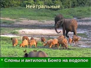 Нейтральные Слоны и антилопа Бонго на водопое