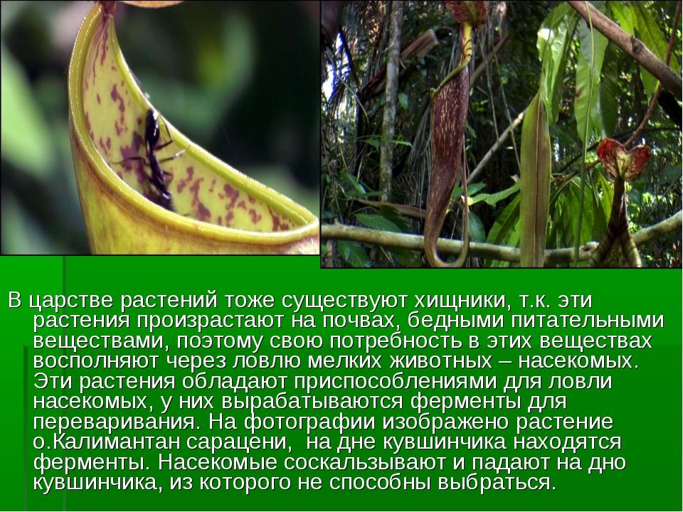 В царстве растений тоже существуют хищники, т.к. эти растения произрастают на...