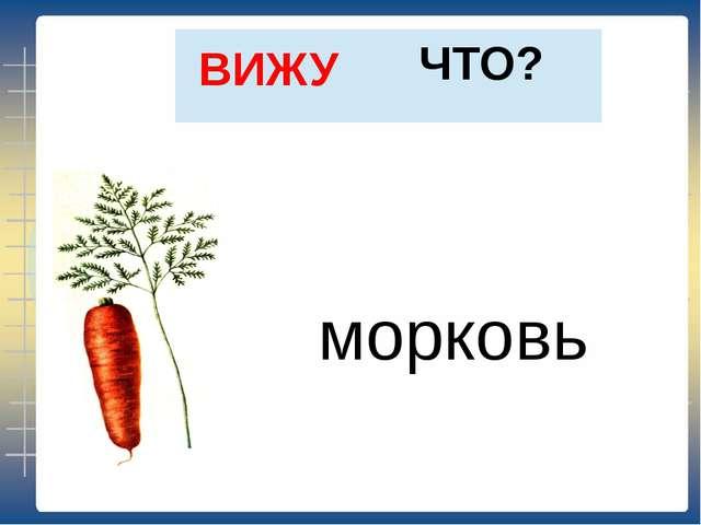 ЧТО? ВИЖУ морковь