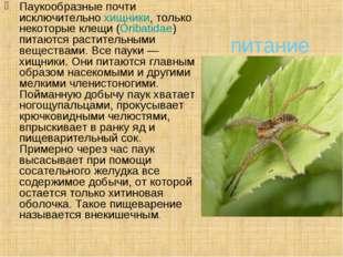 питание Паукообразные почти исключительнохищники, только некоторые клещи (O
