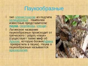 Паукообразные типчленистоногихиз подтипахелицеровых. Наиболее известные п
