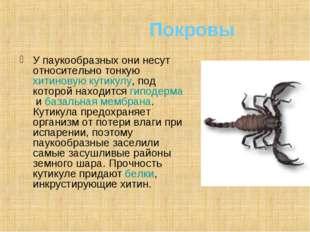 Покровы У паукообразных они несут относительно тонкуюхитиновуюкутикулу, по