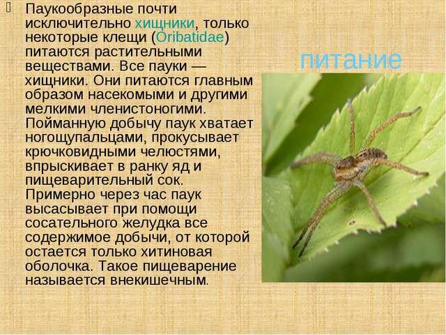 питание Паукообразные почти исключительнохищники, только некоторые клещи (O...