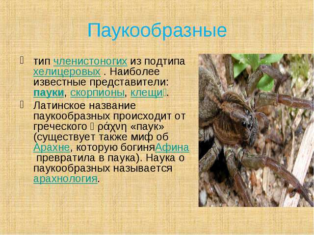 Паукообразные типчленистоногихиз подтипахелицеровых. Наиболее известные п...