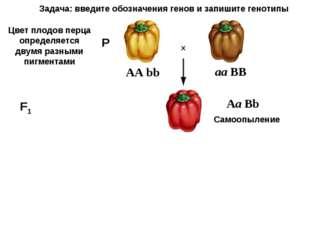АА bb X F1 Цвет плодов перца определяется двумя разными пигментами Самоопылен