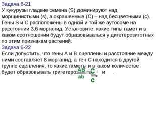 Задача 6-21 У кукурузы гладкие семена (S) доминируют над морщинистыми (s), а