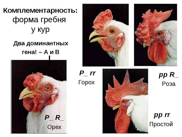 Комплементарность: форма гребня у кур pp rr Простой P_ rr Горох pp R_ Роза P_...