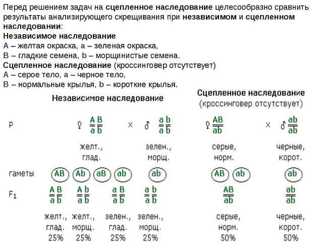 Решение задач по генетике сцепления как решить задачу 302