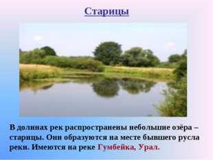 Старицы В долинах рек распространены небольшие озёра – старицы. Они образуютс