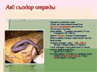 Аяқсыздар отряды Сақиналы құртпошым Топырақта тіршілік етуіне сәйкес аяқтары