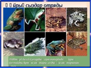 Құйрықсыздар отряды 3500түрі белгілі,олардың ересектерінде құйрық болмайды.Ар