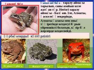 Кәдімгі құрбақа Жасыл құрбақа Қызан құрбақа-Мадагаскарда кездеседі, өте улы .