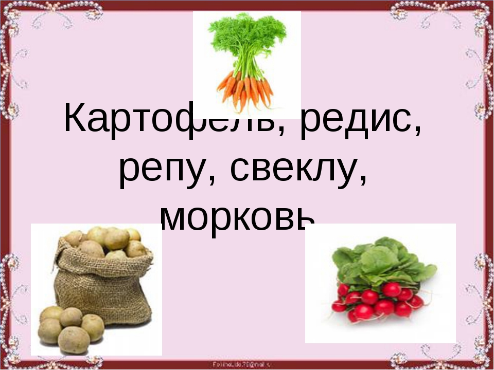 Картофель, редис, репу, свеклу, морковь.