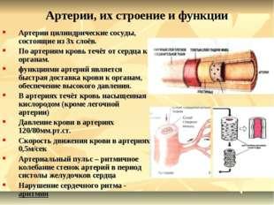 Артерии, их строение и функции Артерии цилиндрические сосуды, состоящие из 3х