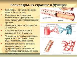 Капилляры, их строение и функции Капилляры – микроскопические однослойные сос