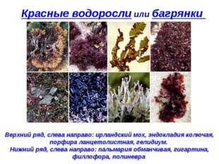 Красные водоросли или багрянки Верхний ряд, слева направо: ирландский мох, эн