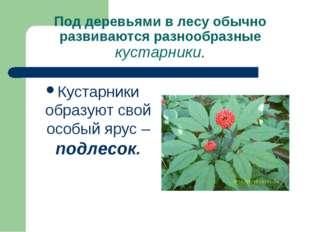 Под деревьями в лесу обычно развиваются разнообразные кустарники. Кустарники