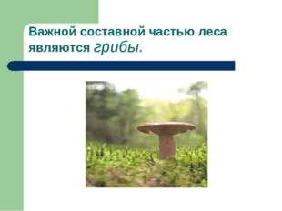 Важной составной частью леса являются грибы.