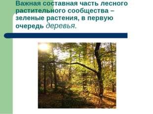 Важная составная часть лесного растительного сообщества – зеленые растения, в