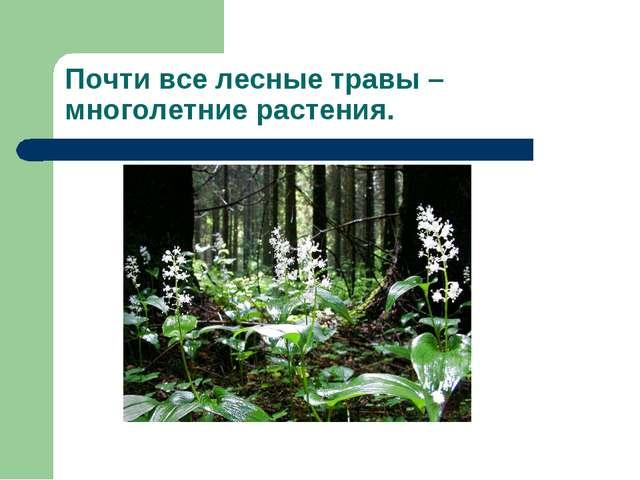 Почти все лесные травы – многолетние растения.