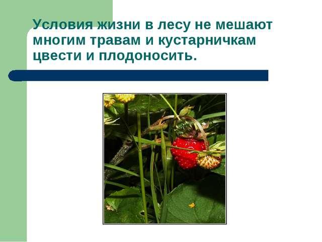 Условия жизни в лесу не мешают многим травам и кустарничкам цвести и плодонос...