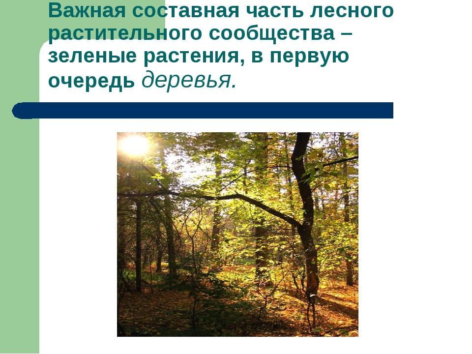 Важная составная часть лесного растительного сообщества – зеленые растения, в...