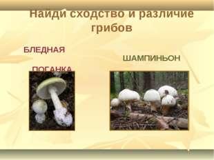 БЛЕДНАЯ ПОГАНКА ШАМПИНЬОН Найди сходство и различие грибов