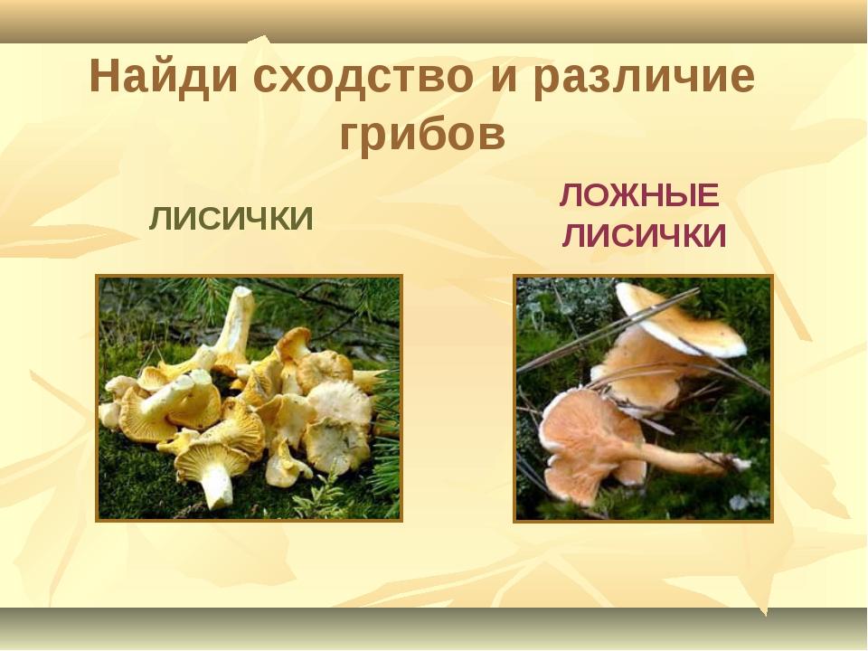 ЛОЖНЫЕ ЛИСИЧКИ ЛИСИЧКИ Найди сходство и различие грибов