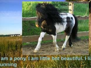 I am a pony. I am little but beautiful. I like running