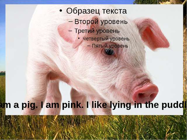 I am a pig. I am pink. I like lying in the puddles