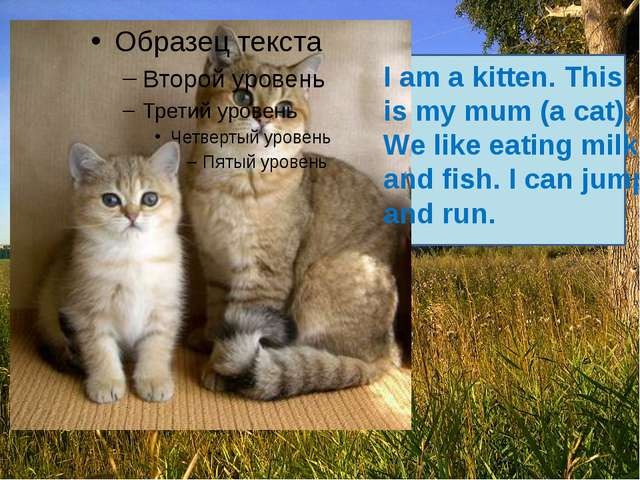 I am a kitten. This is my mum (a cat). We like eating milk and fish. I can j...