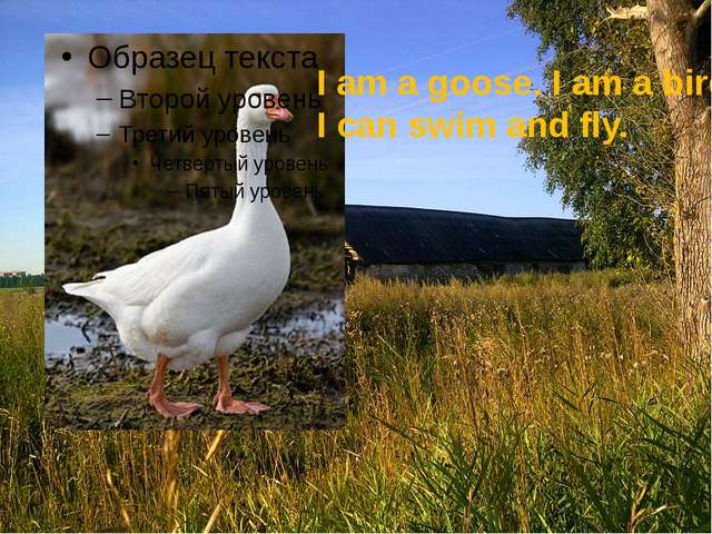 I am a goose. I am a bird. I can swim and fly.