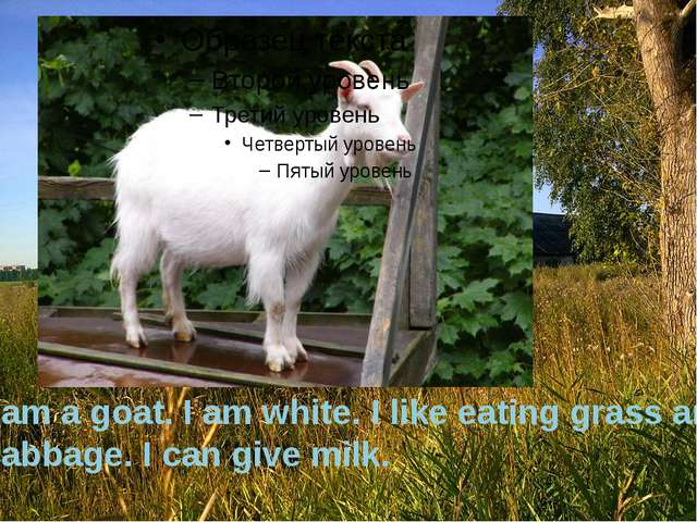 I am a goat. I am white. I like eating grass and cabbage. I can give milk.