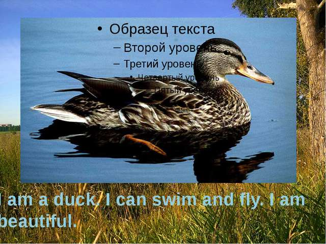 I am a duck. I can swim and fly. I am beautiful.