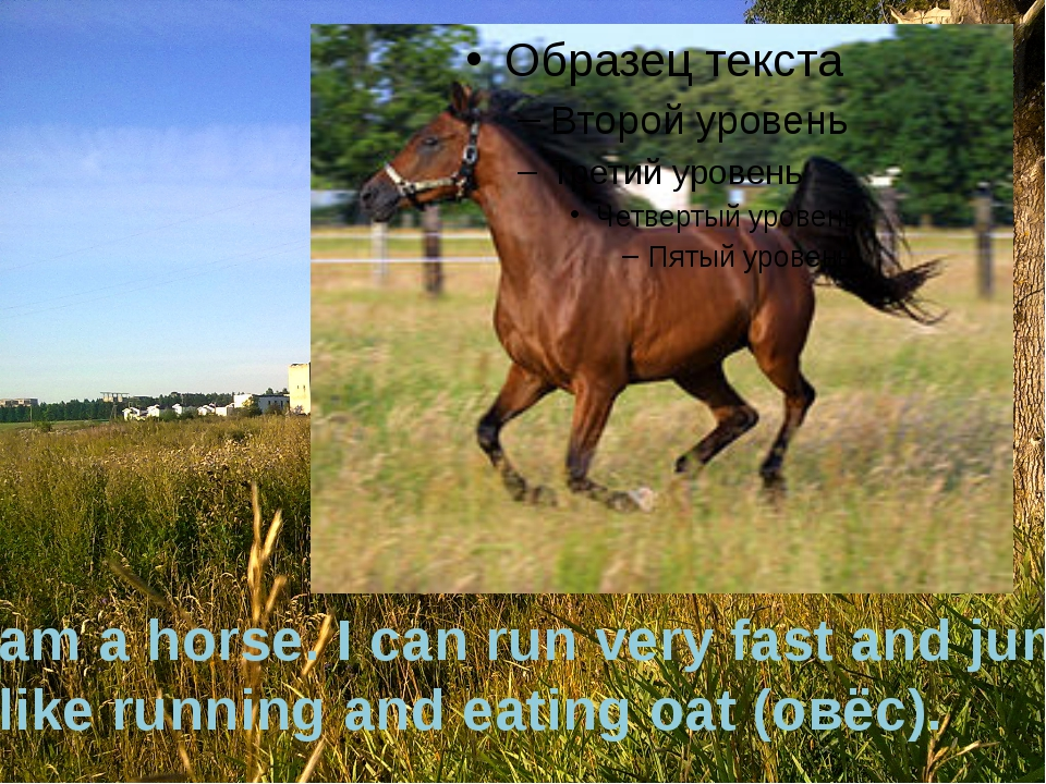 I am a horse. I can run very fast and jump. I like running and eating oat (ов...