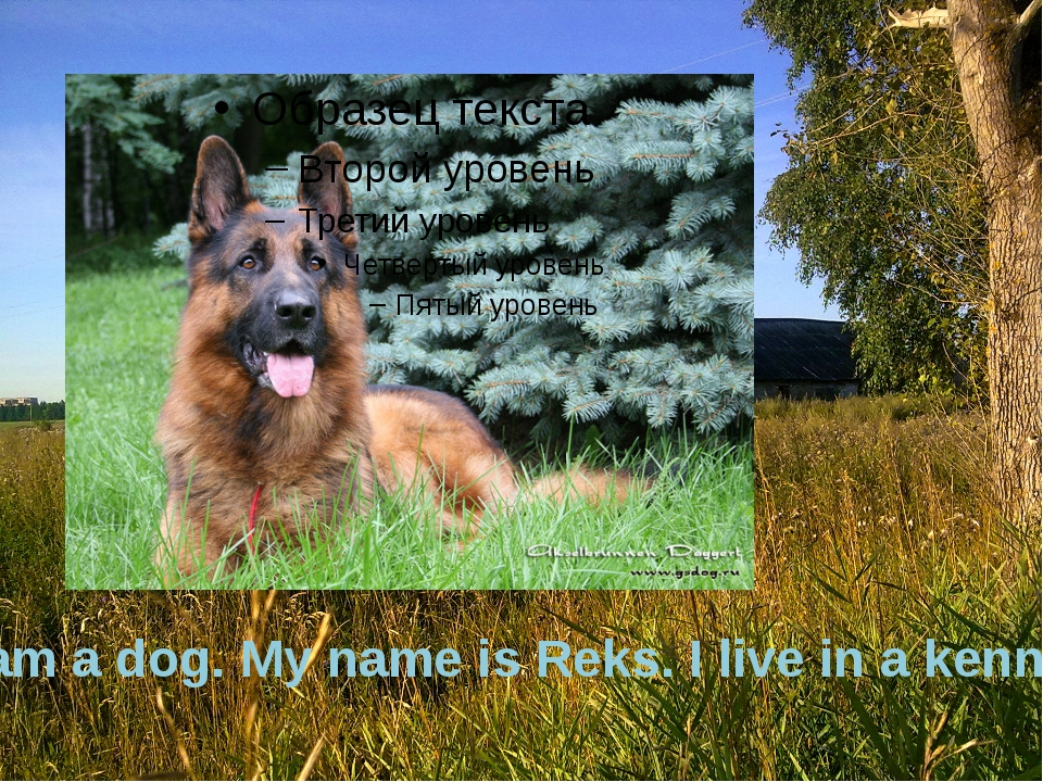 I am a dog. My name is Reks. I live in a kennel.