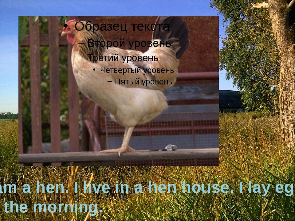 I am a hen. I live in a hen house. I lay eggs in the morning.