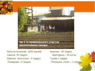 На 1 га пришкольного участка расположены овощи: Капуста кочанная 1000 корней,