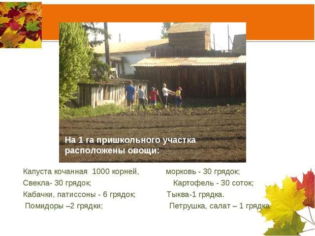На 1 га пришкольного участка расположены овощи: Капуста кочанная 1000 корней,...