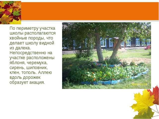 По периметру участка школы располагаются хвойные породы, что делает школу вид...