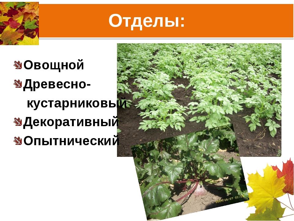 Отделы: Овощной Древесно- кустарниковый Декоративный Опытнический