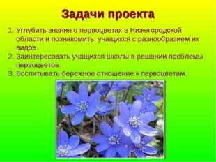 Задачи проекта Углубить знания о первоцветах в Нижегородской области и познак