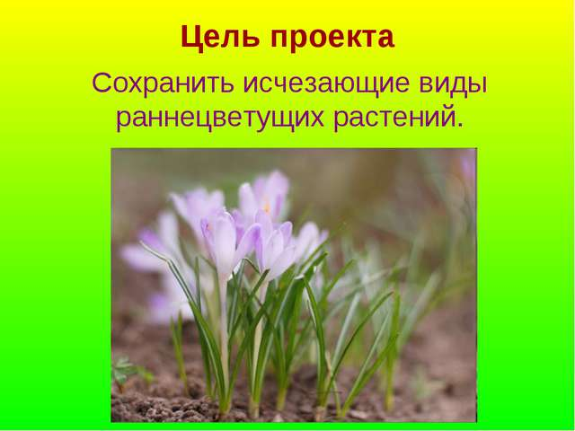 Цель проекта Сохранить исчезающие виды раннецветущих растений.