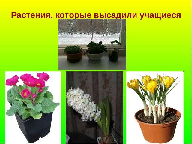 Растения, которые высадили учащиеся