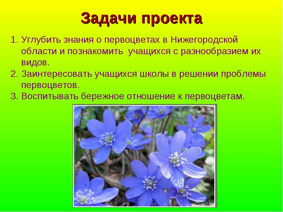 Задачи проекта Углубить знания о первоцветах в Нижегородской области и познак...